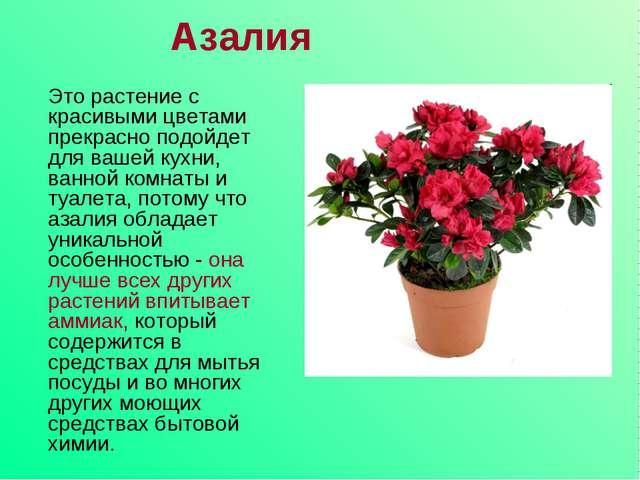 Азалия Это растение с красивыми цветами прекрасно подойдет для вашей кухни, в...