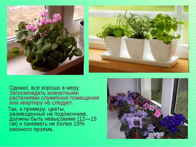Однако, все хорошо в меру. Загромождать комнатными растениями служебное поме...