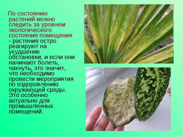 По состоянию растений можно следить за уровнем экологического состояния поме...