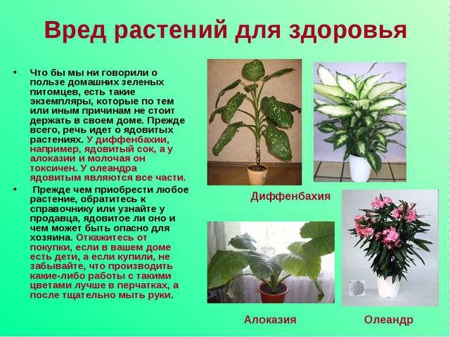 Вред растений для здоровья Что бы мы ни говорили о пользе домашних зеленых пи...