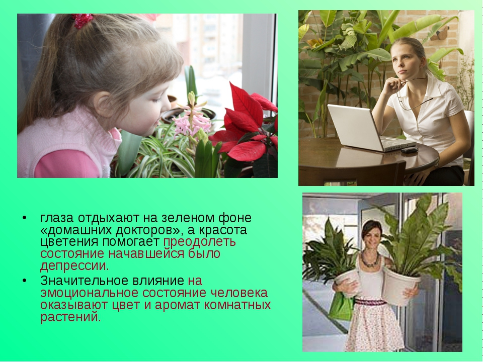 глаза отдыхают на зеленом фоне «домашних докторов», а красота цветения помога...