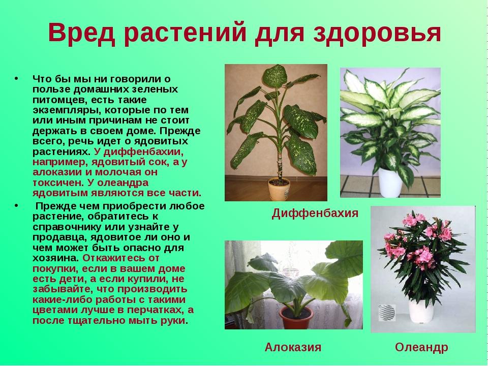 Домашние цветы вредные