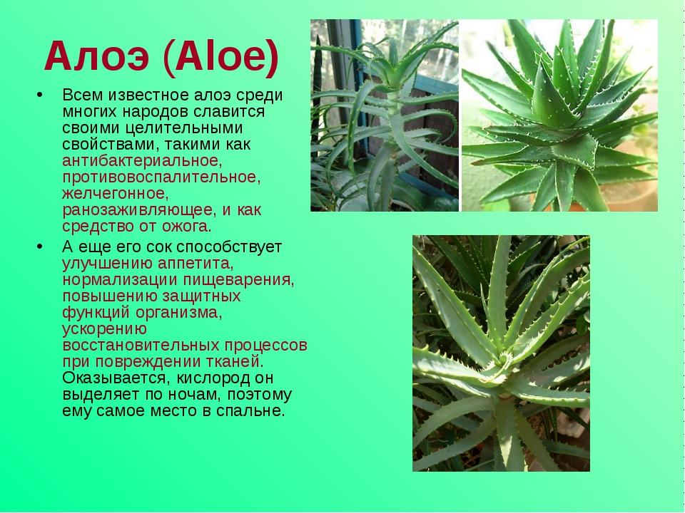 Алоэ (Aloe) Всем известное алоэ среди многих народов славится своими целител...