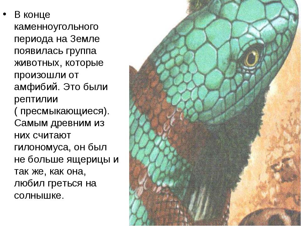 В конце каменноугольного периода на Земле появилась группа животных, которые...