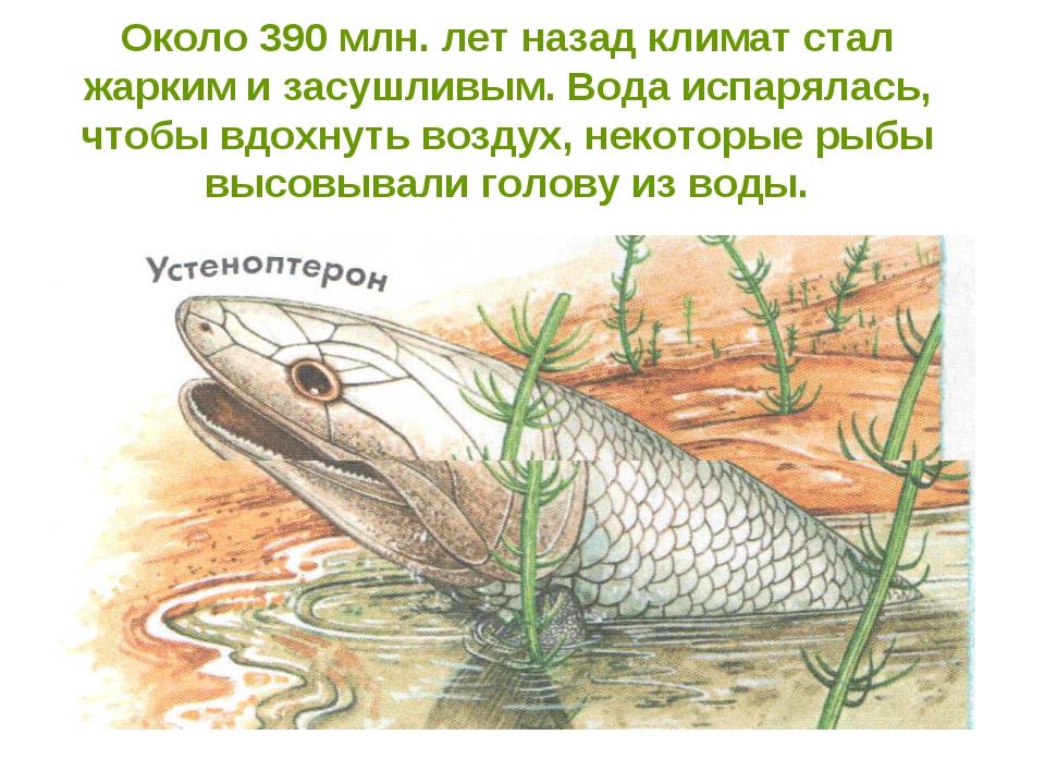 Около 390 млн. лет назад климат стал жарким и засушливым. Вода испарялась, чт...