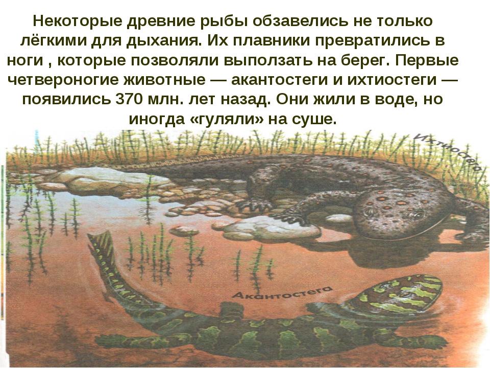 Некоторые древние рыбы обзавелись не только лёгкими для дыхания. Их плавники...