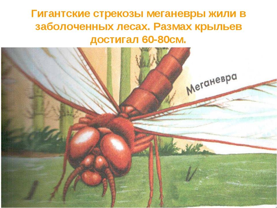 Гигантские стрекозы меганевры жили в заболоченных лесах. Размах крыльев дости...