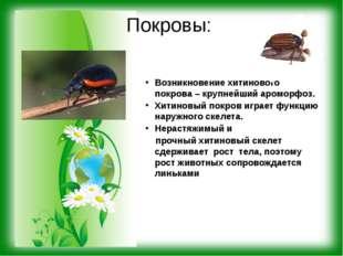 Покровы: Возникновение хитинового покрова – крупнейший ароморфоз. Хитиновый п