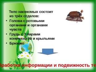 Тело насекомых состоит из трёх отделов: Голова с ротовыми органами и органам