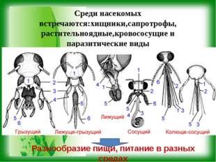 Среди насекомых встречаются:хищники,сапротрофы, растительноядные,кровососущие