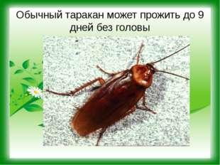 Обычный таракан может прожить до 9 дней без головы