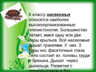 К классу насекомых относятся наиболее высокоорганизованные членистоногие. Бол