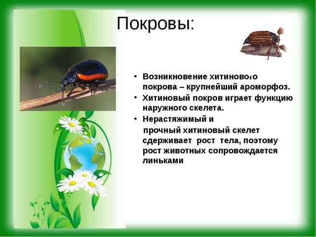 Покровы: Возникновение хитинового покрова – крупнейший ароморфоз. Хитиновый п...