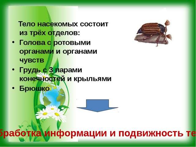 Тело насекомых состоит из трёх отделов: Голова с ротовыми органами и органам...