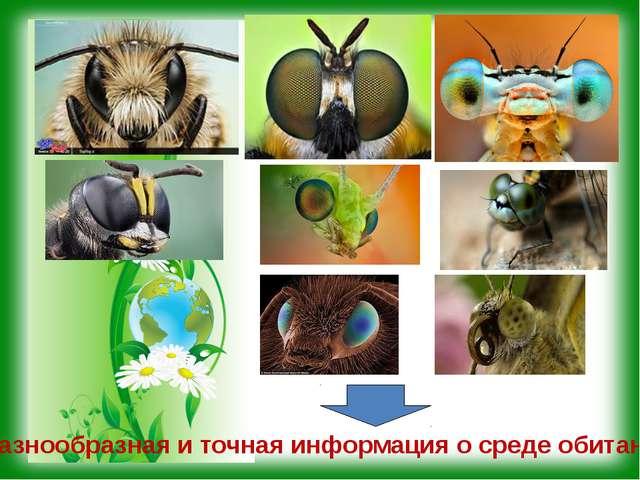 Разнообразная и точная информация о среде обитания