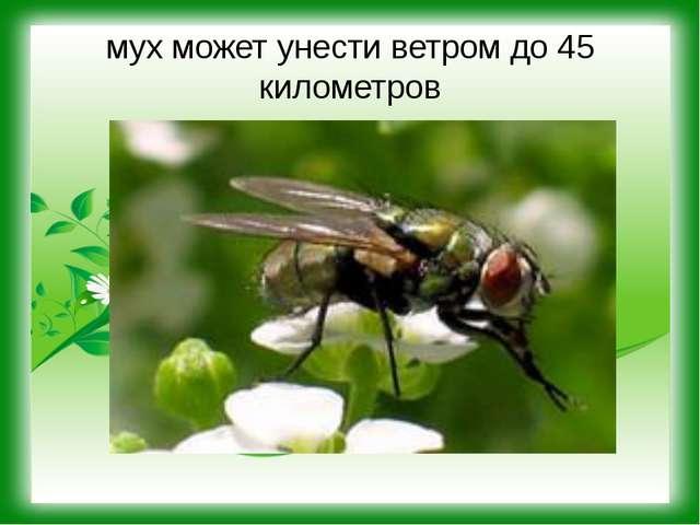 мух может унести ветром до 45 километров