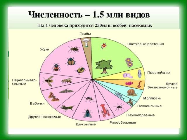 Численность – 1.5 млн видов На 1 человека приходится 250млн. особей насекомых