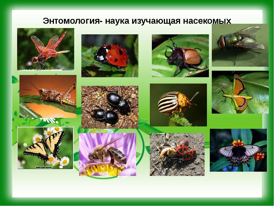 Энтомология- наука изучающая насекомых