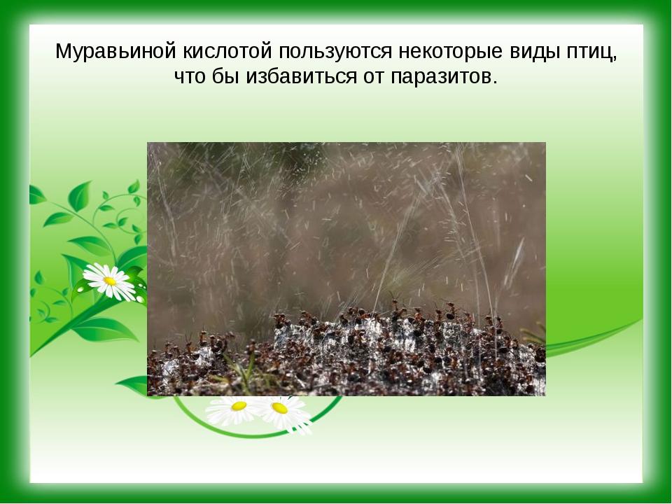 Муравьиной кислотой пользуются некоторые виды птиц, что бы избавиться от пара...