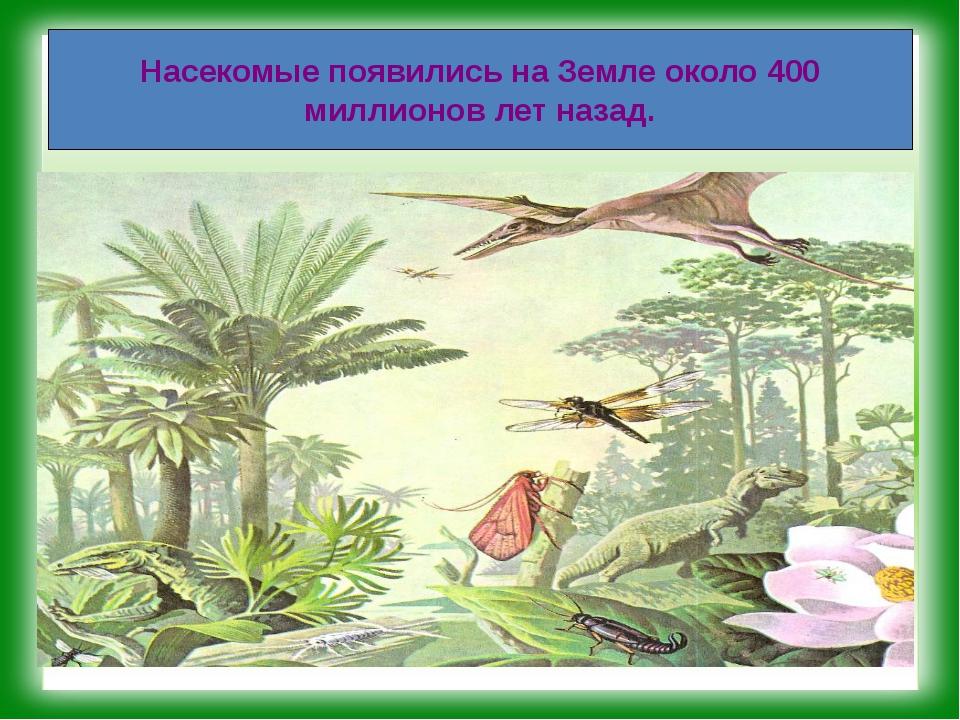 Насекомые появились на Земле около 400 миллионов лет назад.