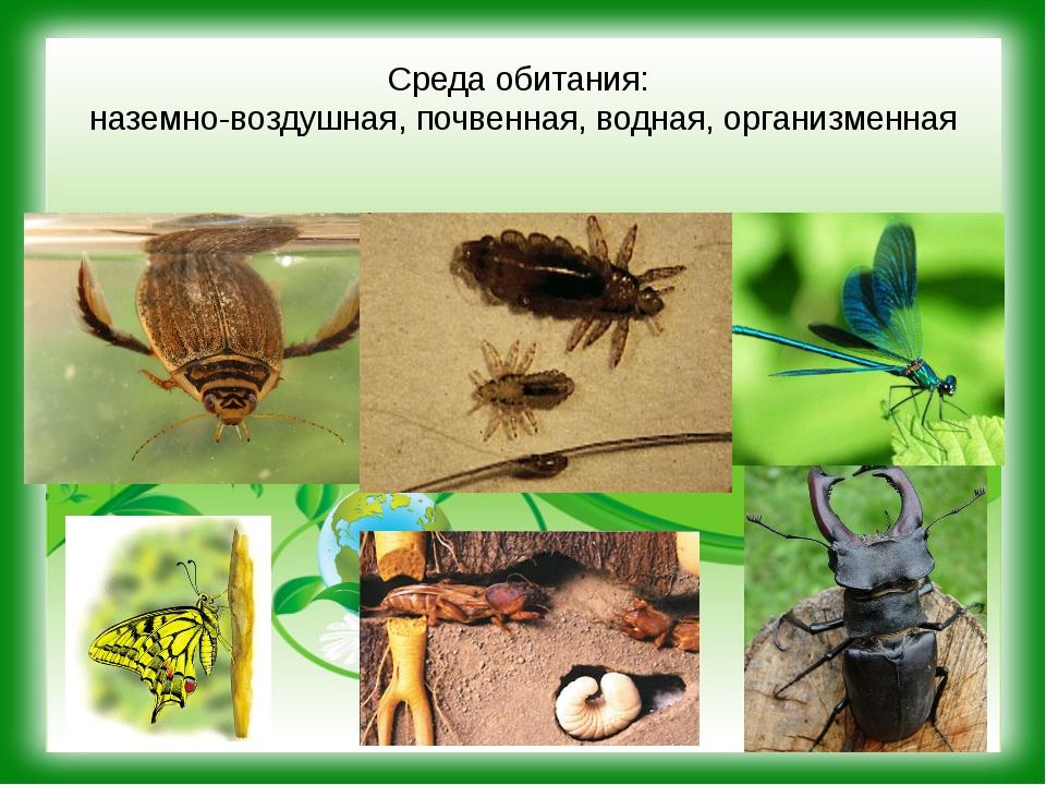 Среда обитания: наземно-воздушная, почвенная, водная, организменная