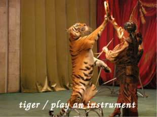 tiger / play an instrument