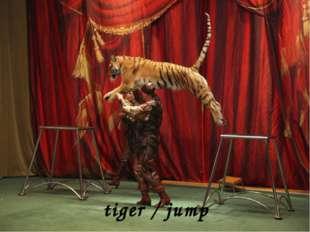 tiger / jump