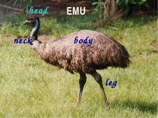 EMU body head neck leg