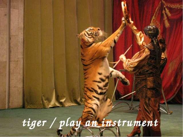 tiger / play an instrument