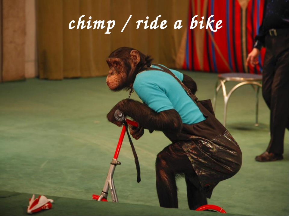 chimp / ride a bike