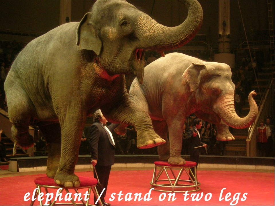 elephant / stand on two legs