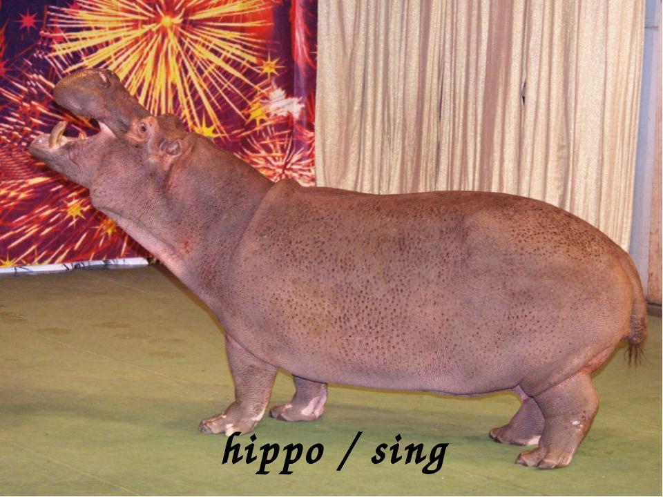 hippo / sing