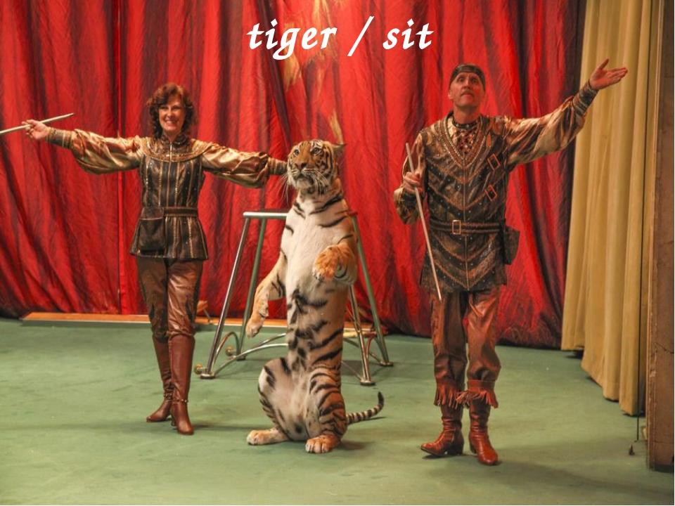 tiger / sit