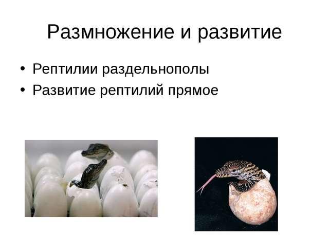 Размножение и развитие Рептилии раздельнополы Развитие рептилий прямое