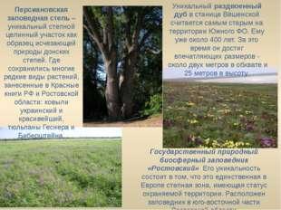 Государственный природный биосферный заповедник «Ростовский» Его уникальност