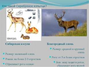 Кто такой Серебряное копытце? Размер: маленький олень Рожки: не более 2-3 отр