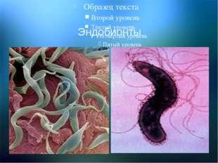 Организменная среда Эндобионты