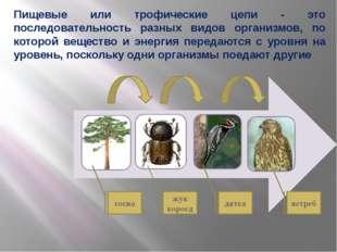 сосна жук короед дятел ястреб Пищевые или трофические цепи - это последовател