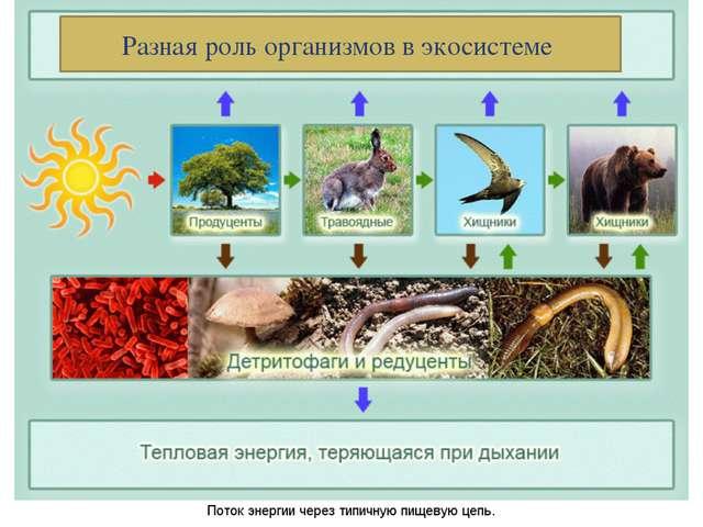 Разная роль организмов в экосистеме