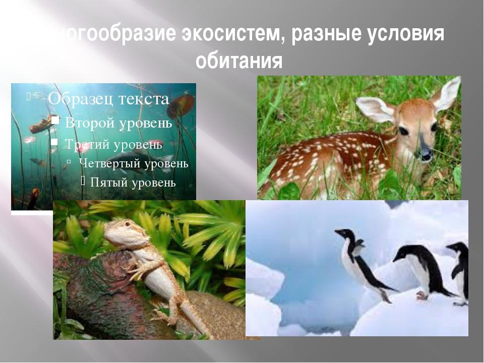 Многообразие экосистем, разные условия обитания