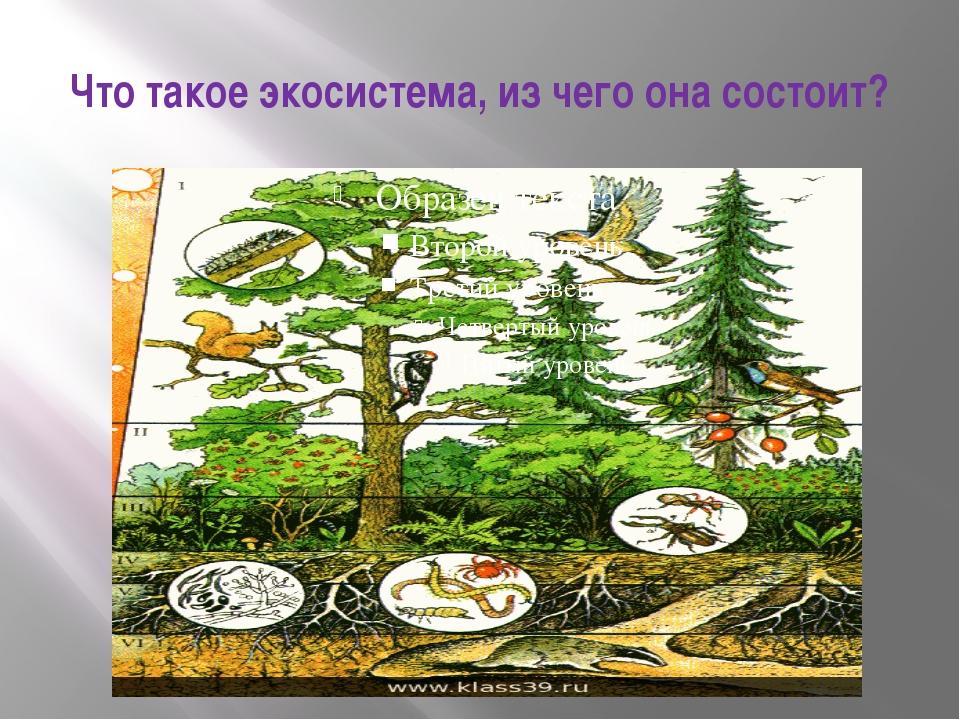 Что такое экосистема, из чего она состоит?