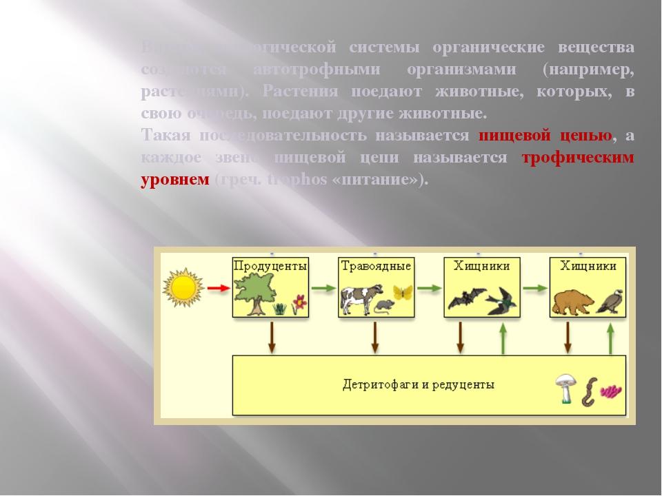 Внутри экологической системы органические вещества создаются автотрофными орг...