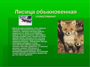 Лисица обыкновенная (отряд Хищные) Ареал распространения этого зверька огроме