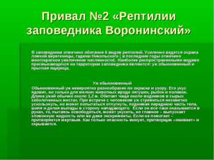 Привал №2 «Рептилии заповедника Воронинский» В заповеднике отмечено обитание