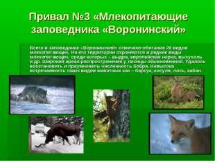 Привал №3 «Млекопитающие заповедника «Воронинский» Всего в заповеднике «Ворон