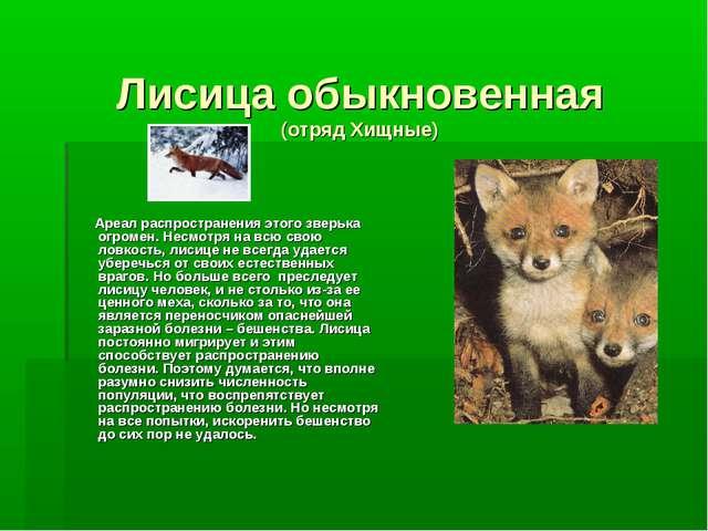 Лисица обыкновенная (отряд Хищные) Ареал распространения этого зверька огроме...