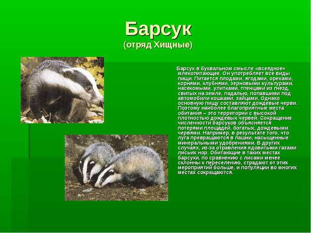 Барсук (отряд Хищные) Барсук в буквальном смысле «всеядное» млекопитающее. Он...