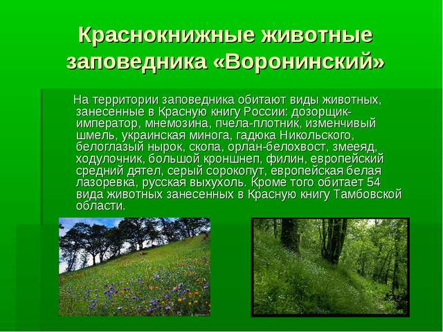 Краснокнижные животные заповедника «Воронинский» На территории заповедника об...