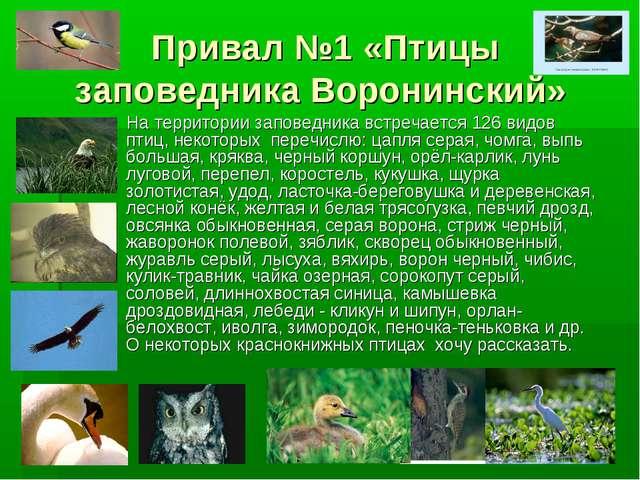 Привал №1 «Птицы заповедника Воронинский» На территории заповедника встречает...