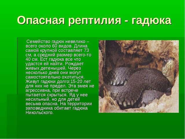 Опасная рептилия - гадюка Семейство гадюк невелико – всего около 60 видов. Дл...
